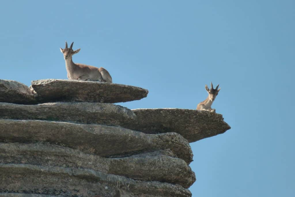 Animals at El Torcal